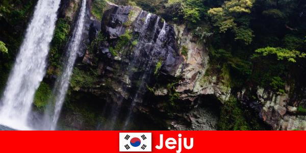 Jeju w Korei Południowej, subtropikalna wyspa wulkaniczna z zapierającymi dech w piersiach lasami dla obcokrajowców