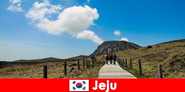 Turyści wędrują przez fantastyczny naturalny krajobraz w Jeju w Korei Południowej