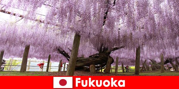 Wycieczki przyrodnicze dla nieznajomych w nietkniętej przyrodzie Fukuoka Japan