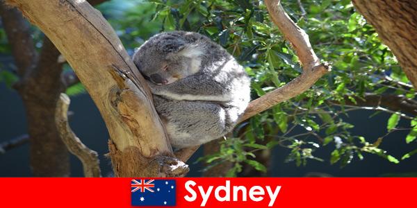 Kierunek Sydney Australia w egzotycznym zoo z noclegiem
