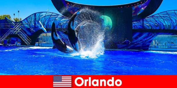 Zarezerwuj podróż indywidualną dla obcokrajowców w Orlando Stany Zjednoczone