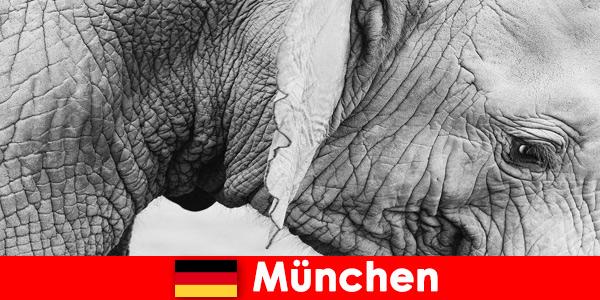 Specjalna wycieczka dla zwiedzających do najbardziej oryginalnego zoo w Niemczech, Monachium